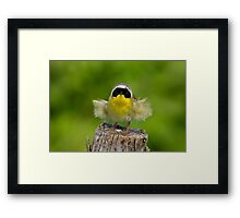 Auntie Em - Auntie Em - Male Common Yellow Throated Warbler Framed Print