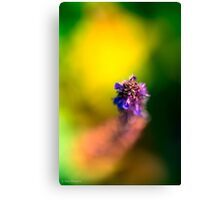 Cavorting with grasshoppers and bumble bees Canvas Print