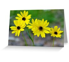Beautiful Daisies Greeting Card