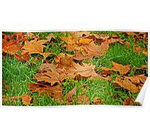 Autumn's Golden Grown Poster