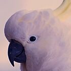 &quot;Good afternoon&quot; Cockatoo by Toni McPherson