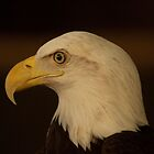 Our National Symbol by Chipper