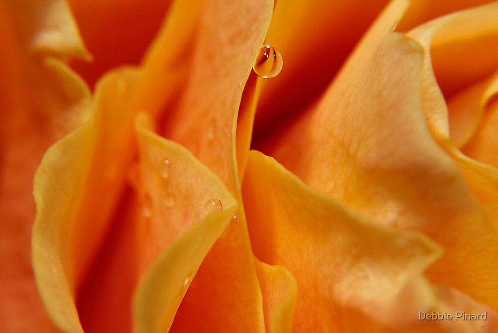 Waterdrop on Yellow Rose Macro by Debbie Pinard