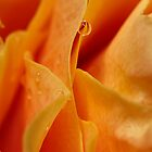 Waterdrop on Yellow Rose Macro by Debbie Pinard