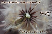 """Dandelion """"Featured"""" Banner by SnappingBeauty"""