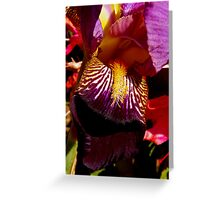 colorful iris abstract #2 Greeting Card
