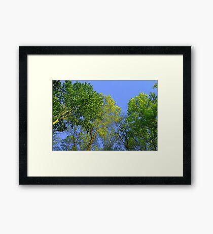 Vying for Vigor from the Sun Framed Print