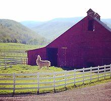 Llama Farm by Elena Celaschi