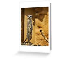 Meerkat,  London Zoo Greeting Card
