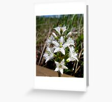 Bog Bean or Buckbean - Pukaskwa National Park Northern Ontario Canada Greeting Card