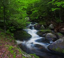 Coldwater Brook's Character, Life, and Song by Murph2010