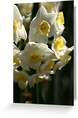 Happy Cluster - Daffodils by Joy Watson