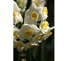 Happy Cluster - Daffodils Photographic Print