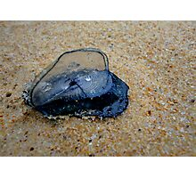By-the-Wind Sailor aka Velella velella Photographic Print