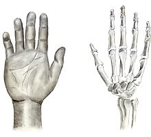 Hand Profile by axemangraphics