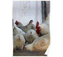 Chicken #2 Poster