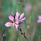 pink flowers by Hege Nolan