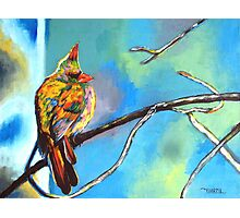 Mr.Cardinal - Cardinal Bird Photographic Print