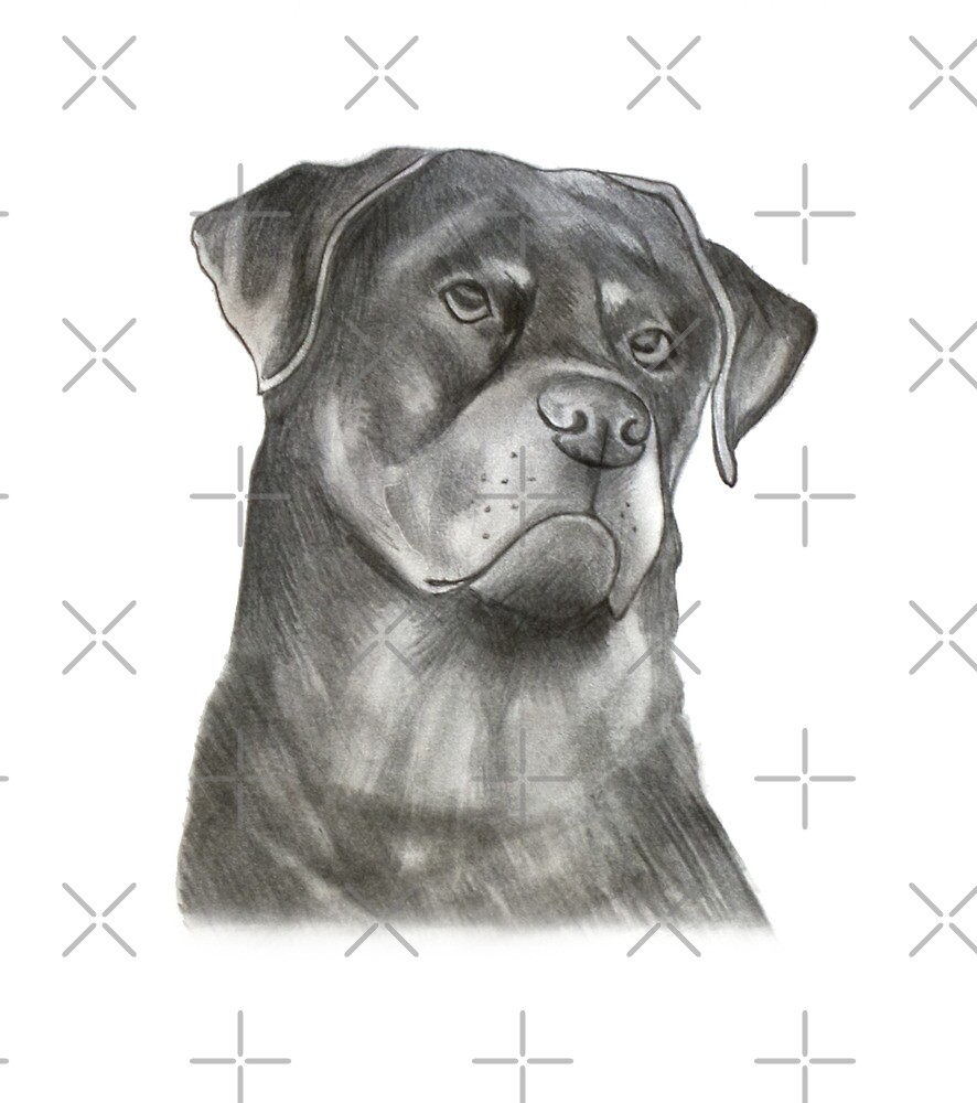 Rottweiler by axemangraphics