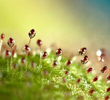 Sundew with Blue by Sharon Johnstone