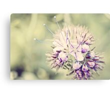 Wildflower in pastell Tones Canvas Print