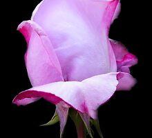 Lilic Rosebud by LoneAngel