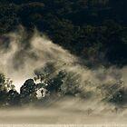 Persistent Mist, King Valley by nealbrey