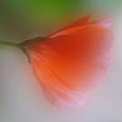 Radiance by enchantedImages