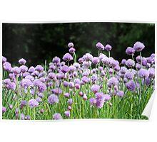 Purple flowers.. Poster