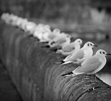 Birds by LukasTomanek