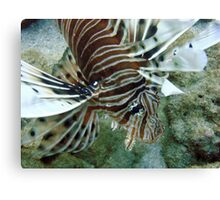 Lionfish, Lighthouse Bay, Exmouth Canvas Print