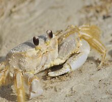 Ghost Crab, As Is by Kim McClain Gregal