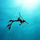 Sundancing Seadragon by JVGMcGhie