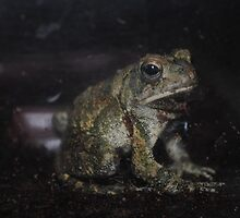 Fowler's Toad II by toxxxickitten