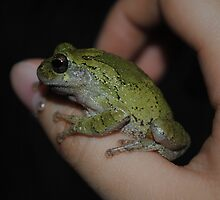Grey Tree Frog 004 by toxxxickitten