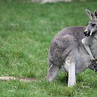 Mummy and Baby Roo. by squidypoo