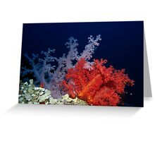 Coral Greeting Card