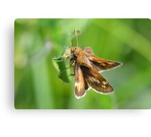 Peck's Skipper Hanging Around Canvas Print