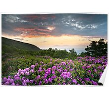 Craggy Gardens Bloom - Rhododendron at Sunset Poster