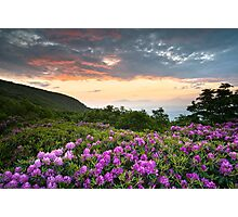 Craggy Gardens Bloom - Rhododendron at Sunset Photographic Print