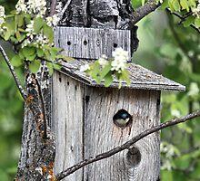 Home Sweet Home by Leslie van de Ligt