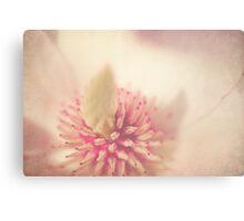 Magnolia in full Bloom Canvas Print
