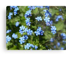 Forget Me Not. Metal Print