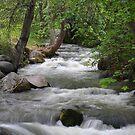 Lithia Creek by Stephen  Van Tuyl