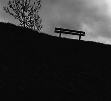 The Bench and Tree by hmartinphotos