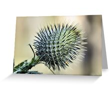 Prickly Greeting Card