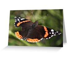 Red Admiral In Flight. Greeting Card