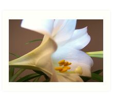 Lily of the Valley 2 Art Print