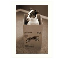 Rat in the Box Art Print