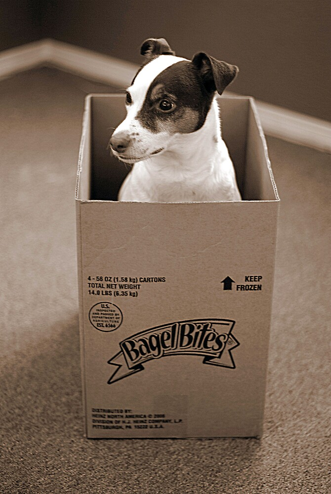 Rat in the Box by SPPhotography